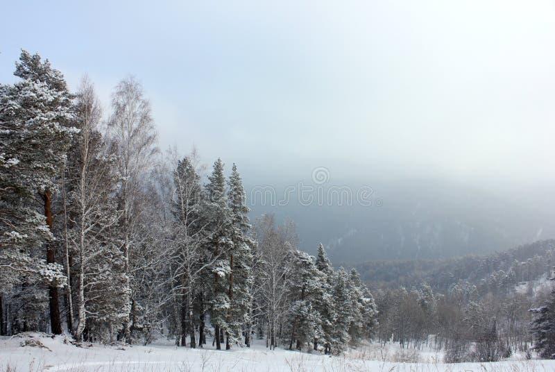 Winternatur Sibirier taiga lizenzfreies stockbild
