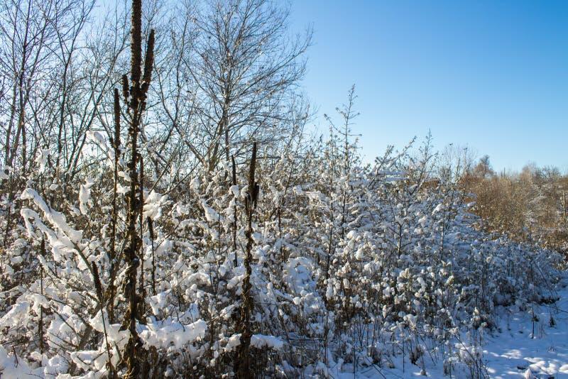 Winternatur unter dem ersten Schnee an einem sonnigen Tag stockbild