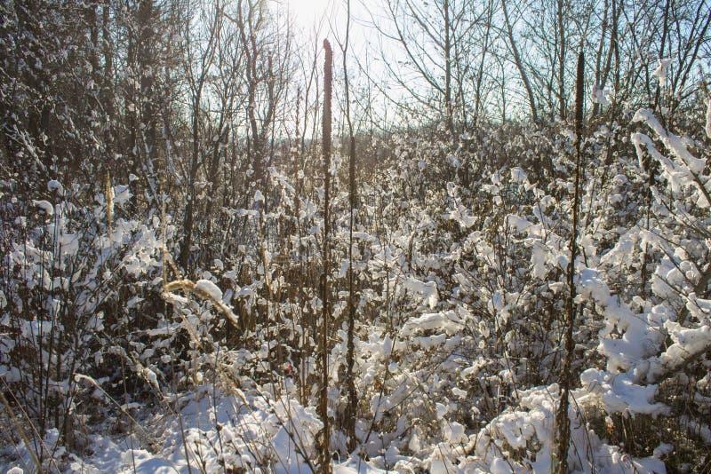 Winternatur unter dem ersten Schnee an einem sonnigen Tag stockfoto