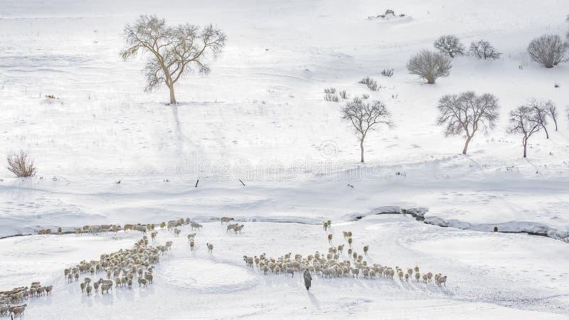 Winternebenfluß stockfotografie