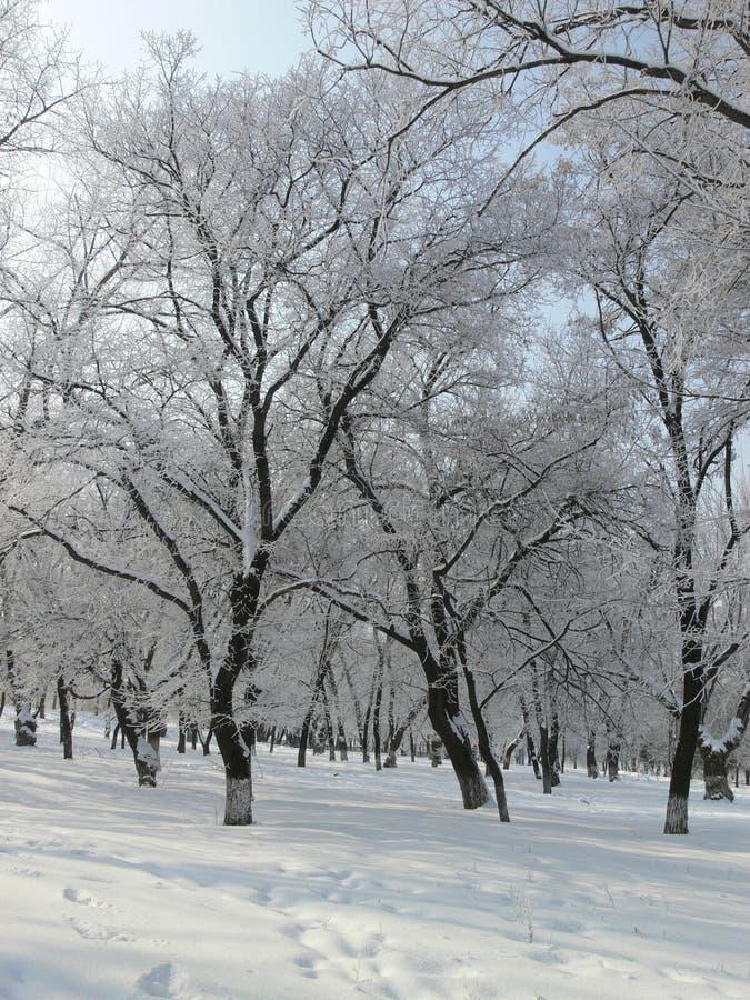 Winterpark 1 stockfoto