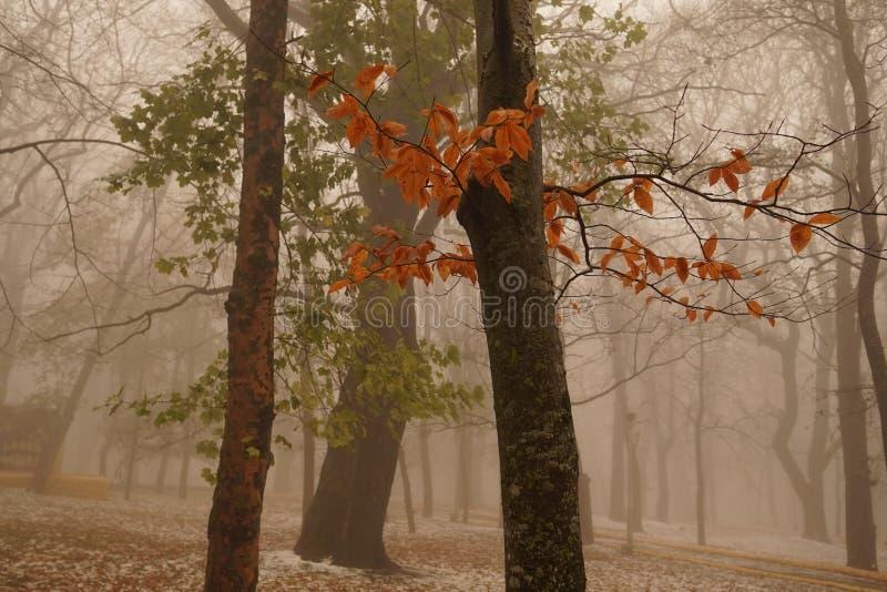 Winterpark im Nebel Lichter entlang der Allee Herbstnebel stockbilder