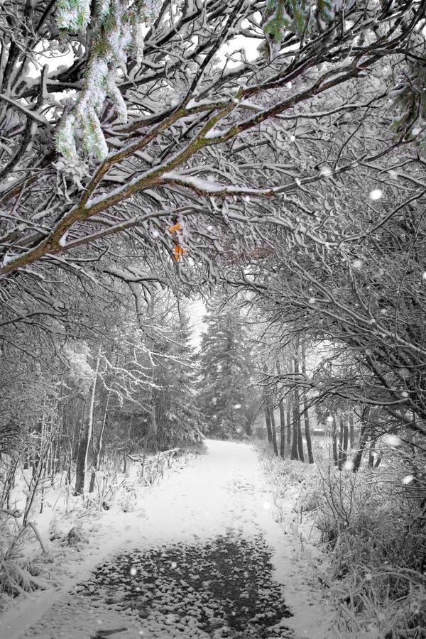 Winterpfad lizenzfreie stockbilder