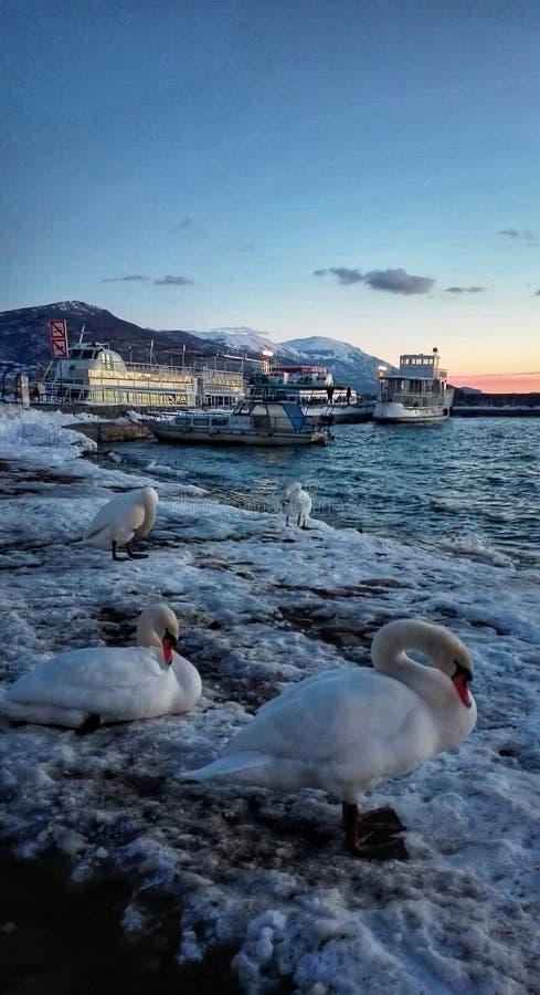 winterphoto de la nieve de la puesta del sol del lago de los cisnes imagenes de archivo