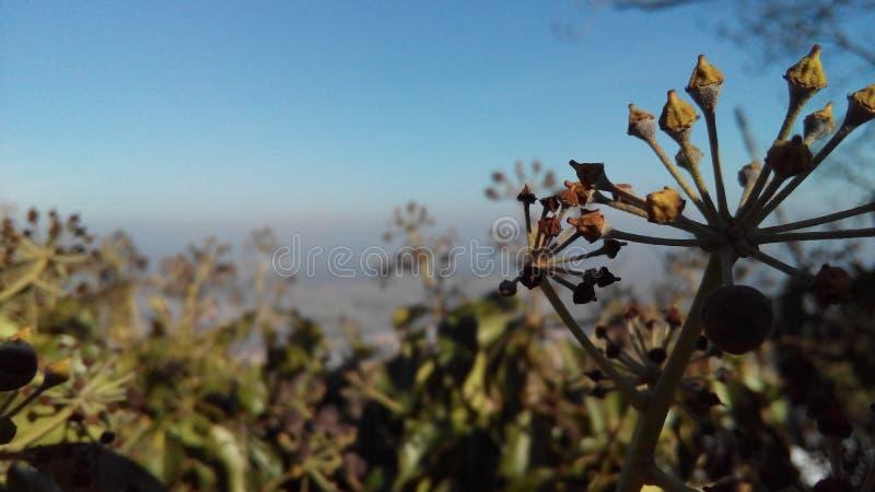 Winterplant fotografia stock