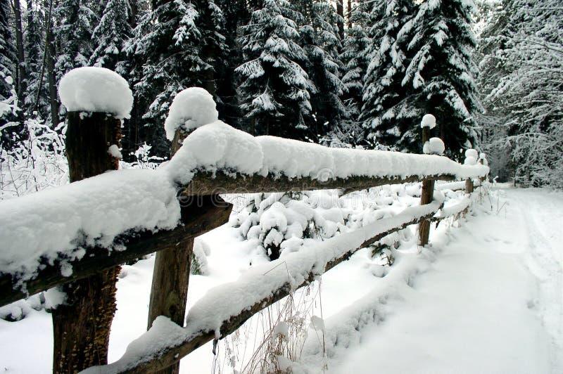 winters drewna fotografia royalty free