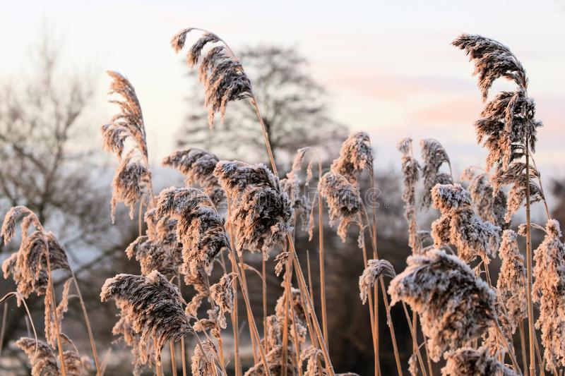 Download Winters Morning. Stock Image - Image: 25512601