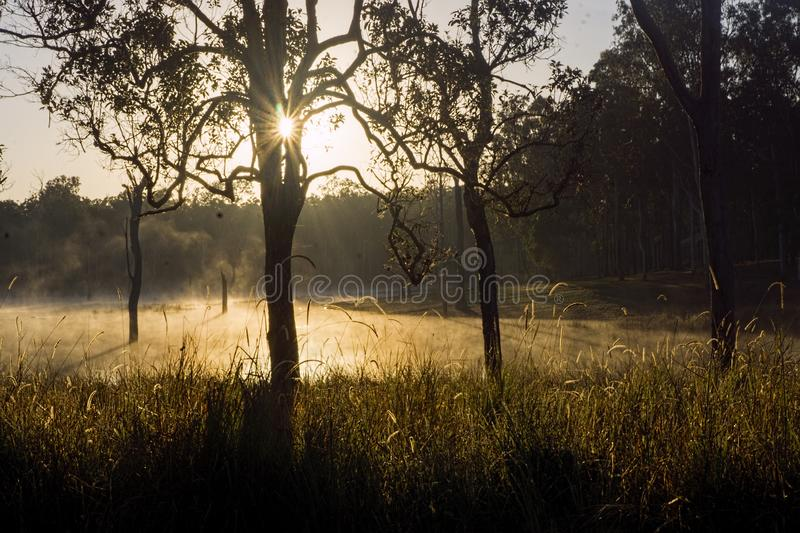 Winters morning with fog on the lake royalty free stock images