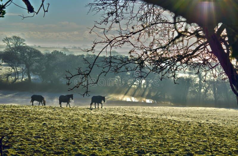 Horses breath royalty free stock image