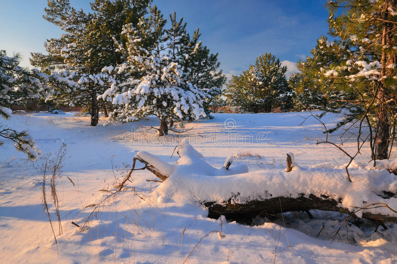 Winters tale. Tales winter trees on snow in ukraine royalty free stock photos
