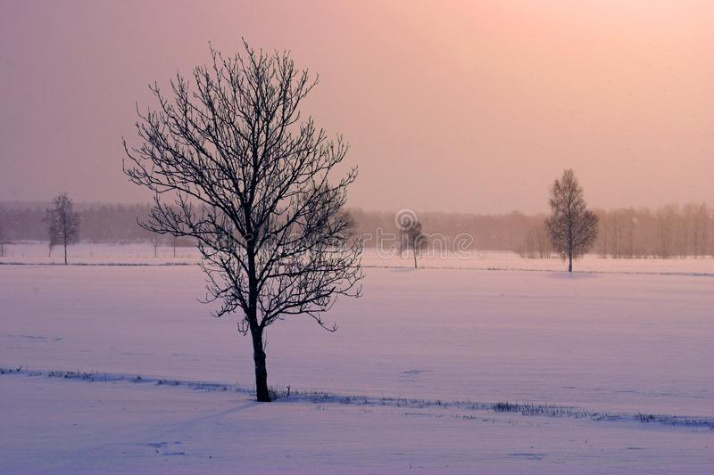 Winters tree in a red landscape stock photo