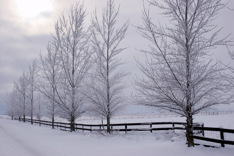 Winterscape. royalty free stock image