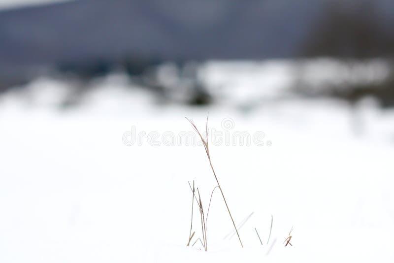 winterscape royaltyfri foto