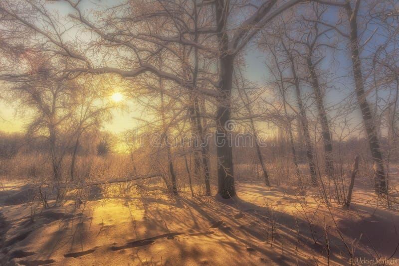 Winterscape hermoso fotos de archivo libres de regalías