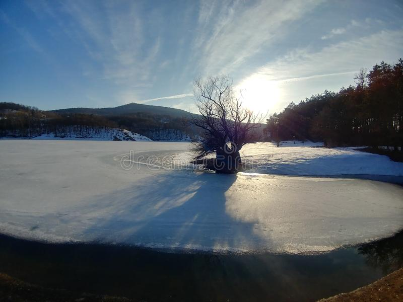 Winterscape tree and a lake view stock photography