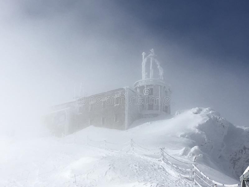 winterschlaf stockfotografie