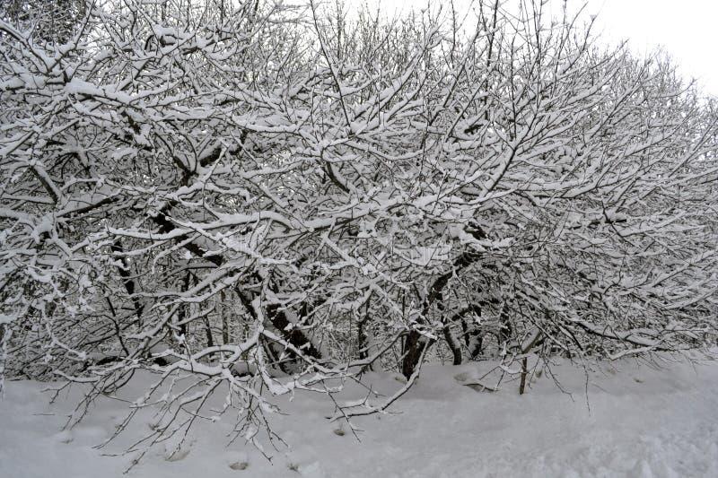 Winterschnee auf Baumzweigen lizenzfreie stockfotografie