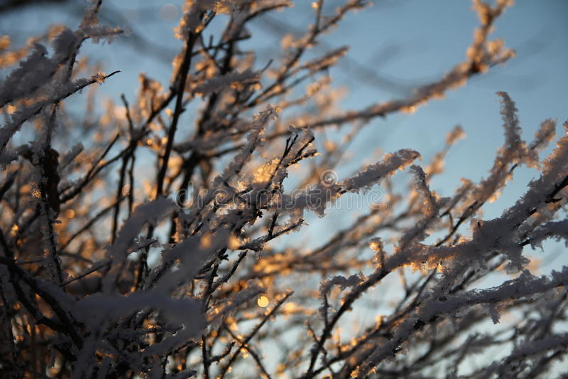 Winterschnee auf Niederlassung lizenzfreie stockfotografie