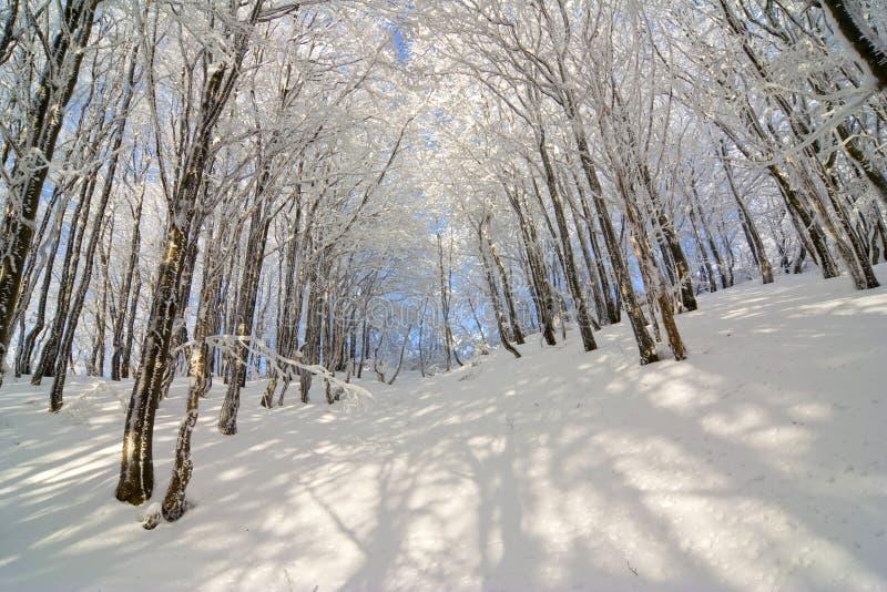 Winterschnee bedeckte Tannenbäume auf Bergabhang auf blauer Himmel backgr stockfotos