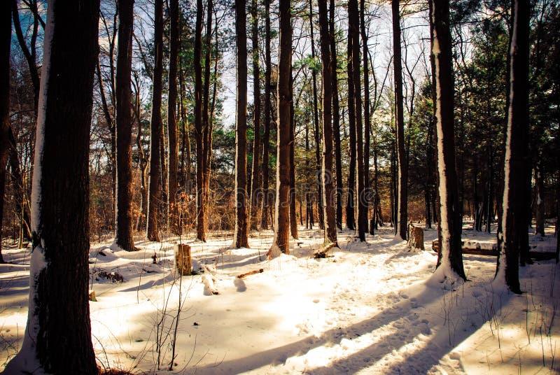 Winterse scène in Boston Massachusetts stock afbeeldingen