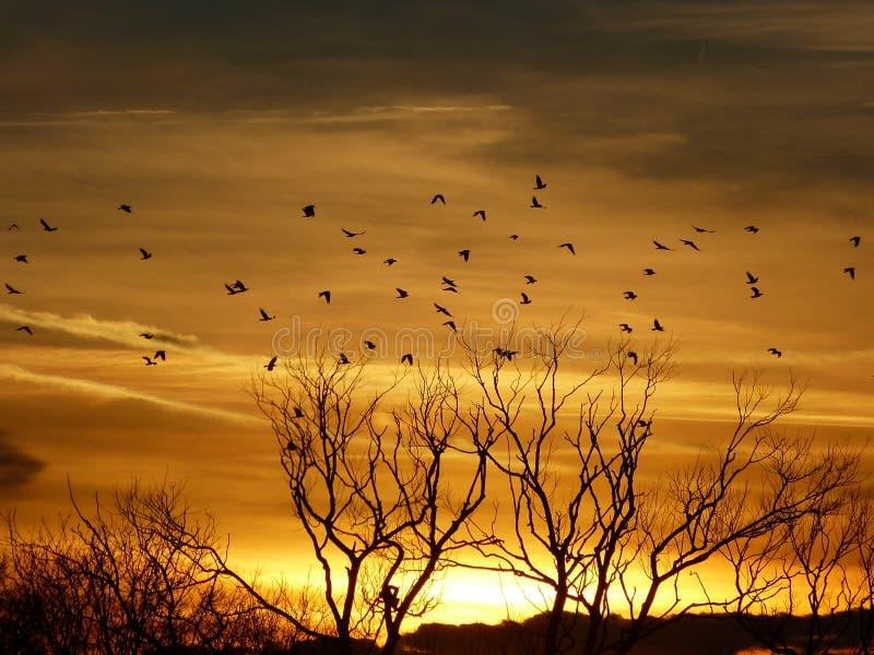 Wintersonnenuntergang über Naturreservat stockfoto