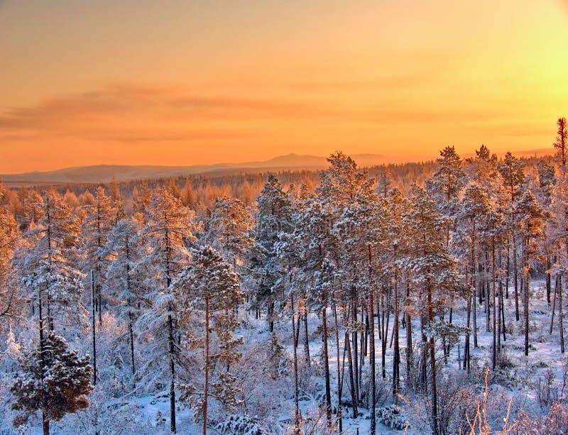 Wintersonnenuntergang im sibirischen taiga lizenzfreie stockfotos