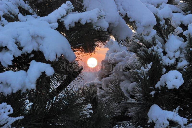 Wintersonnenuntergang im Wald stockfotografie