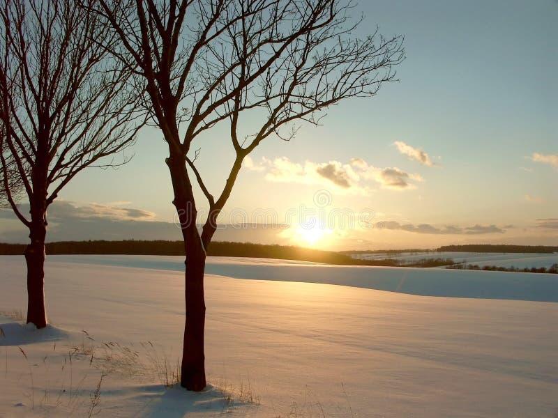 Wintersonnenuntergang mit Bäumen auf einem schneebedeckten Feld stockfotografie