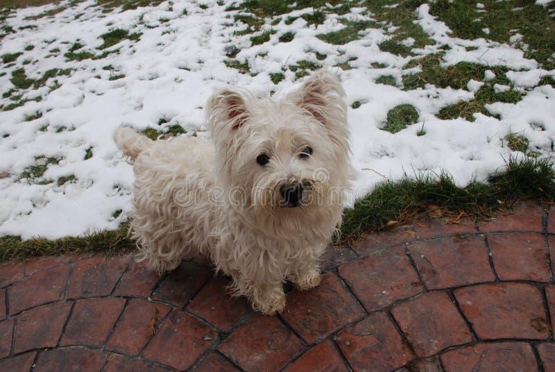 Winterspaß-Hundemodus stockfotos