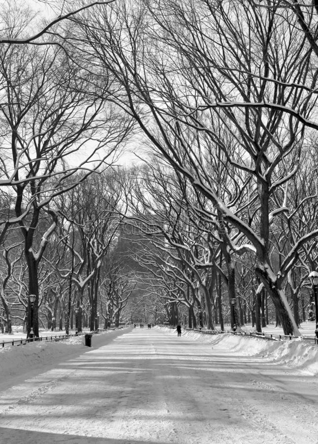 Wintersparren royalty-vrije stock afbeeldingen