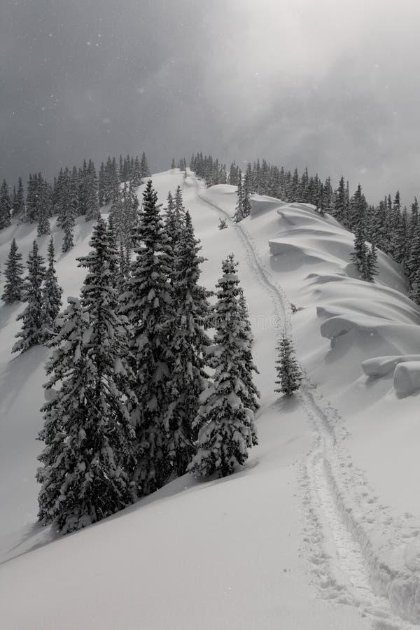 Winterspur stockbild