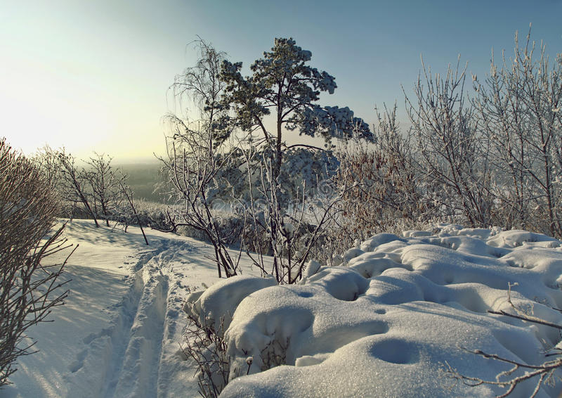 Winterspur entlang den schneebedeckten Büschen und den Bäumen lizenzfreie stockbilder