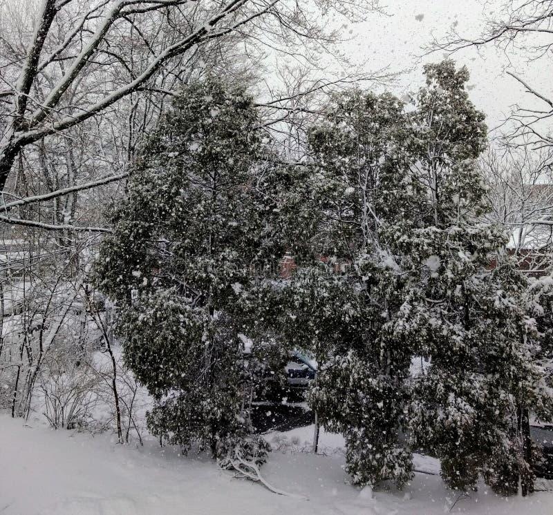 Winterstorm菲立斯的冲击 免版税库存图片