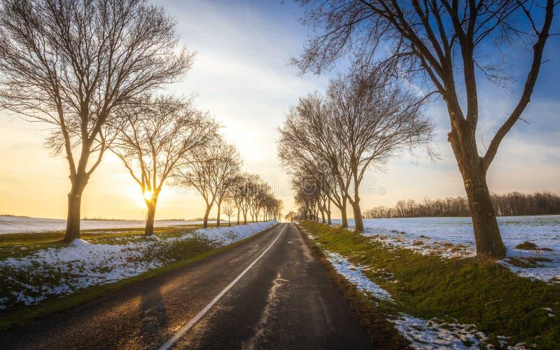 Winterstraße durch die Bäume im Sonnenuntergang lizenzfreie stockbilder