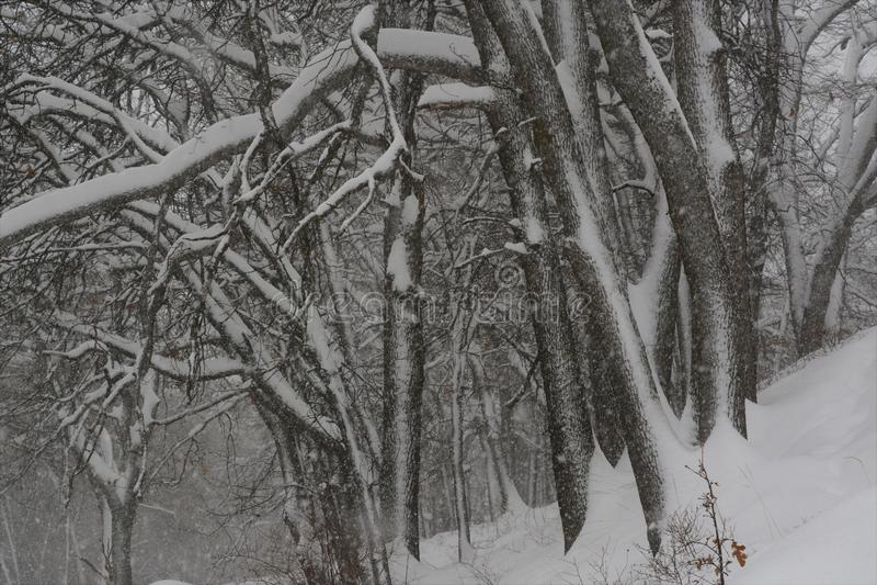 Wintersturm im Wald stockbild