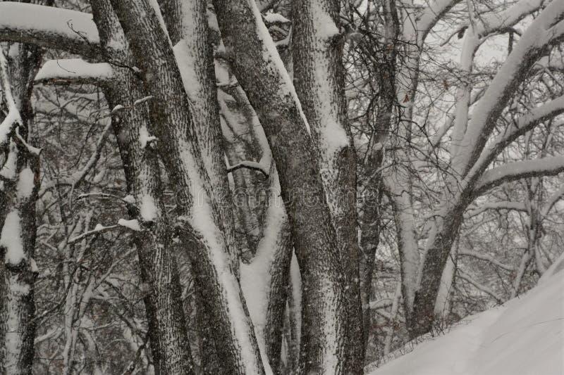 Wintersturm im Wald stockfotografie