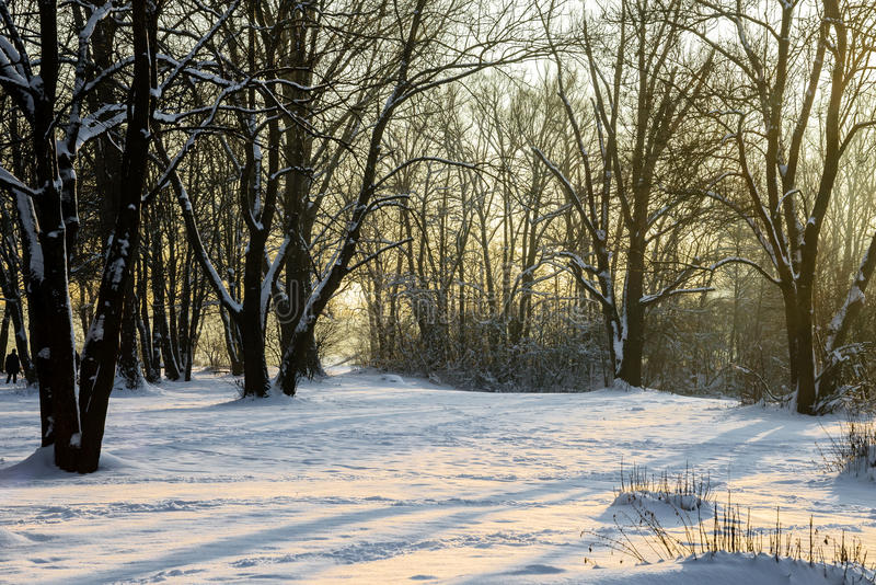 Wintersun royalty free stock images