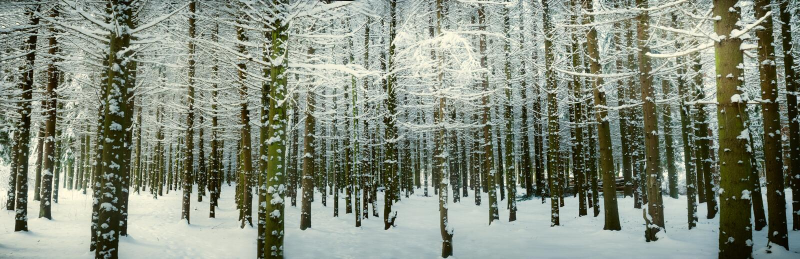 Winterszene lizenzfreies stockfoto