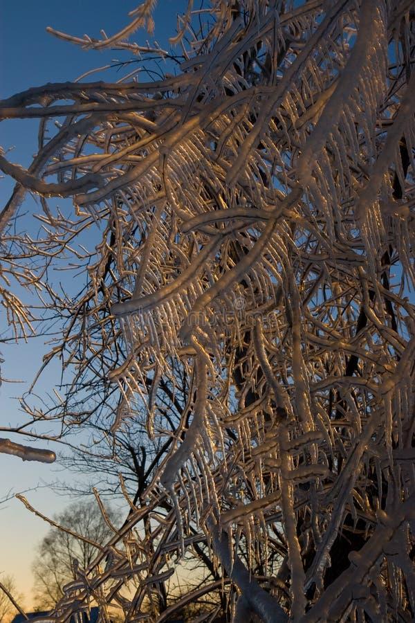 Wintertag und die gefrorenen Bäume lizenzfreies stockbild