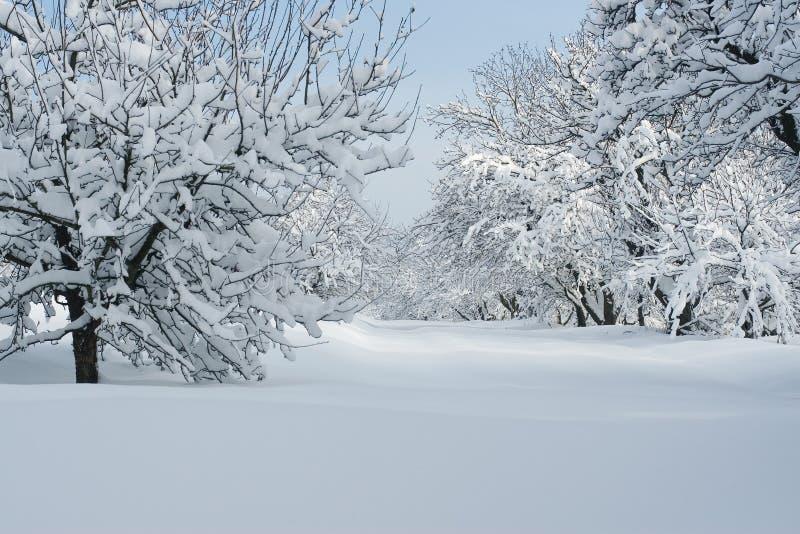 Wintertijd in bos stock fotografie