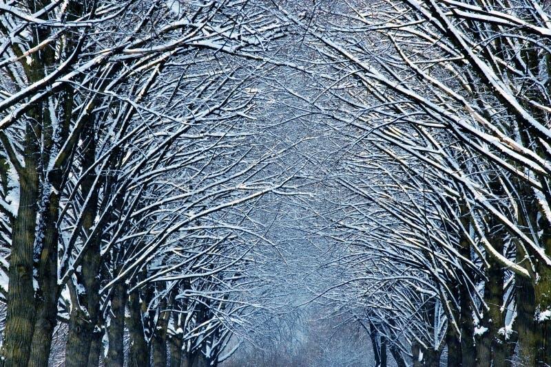 Wintertijd in park royalty-vrije stock afbeeldingen