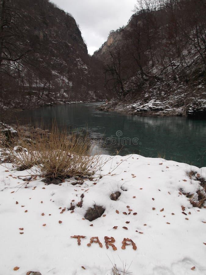 Wintertime реки Тары стоковая фотография rf