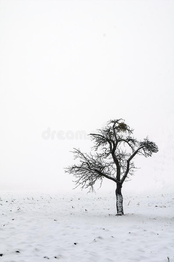 Download Wintertime stock photo. Image of tree, white, snow, contrast - 12884530