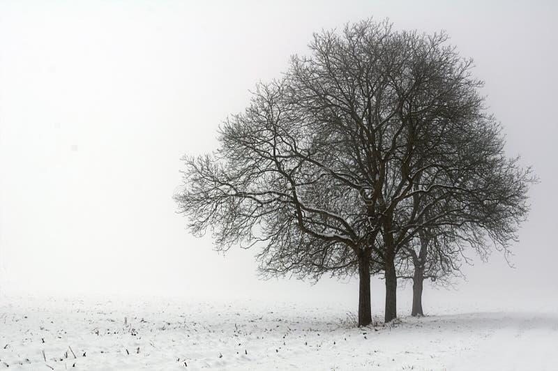 wintertime στοκ φωτογραφίες
