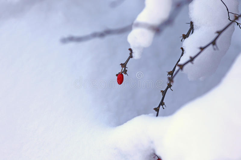 Download Wintertime stock photo. Image of season, beautiful, freezing - 17254334