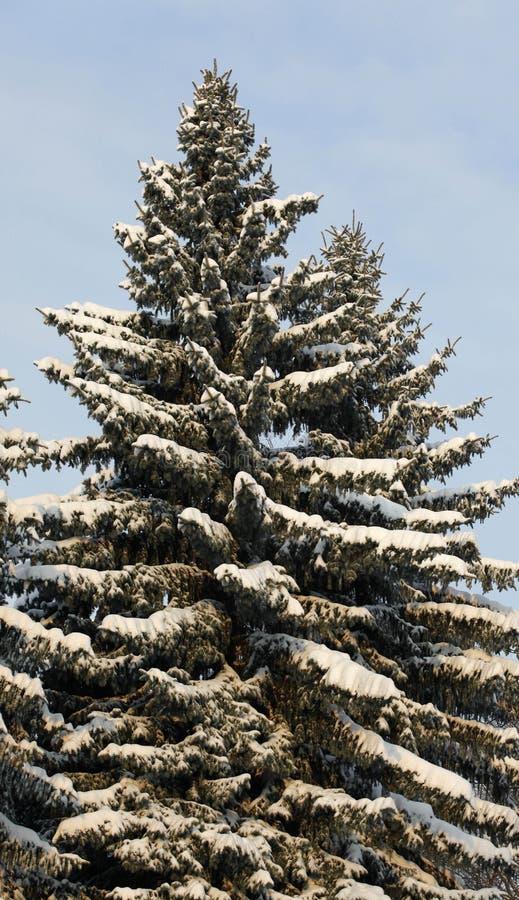 Download Wintertime stock image. Image of season, nature, garden - 17271345