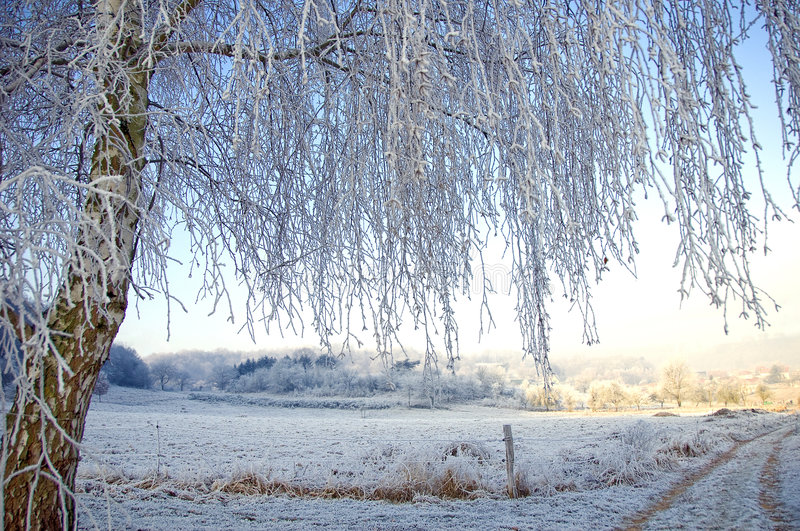 Download Wintertime stock photo. Image of branch, wintertime, season - 7876266
