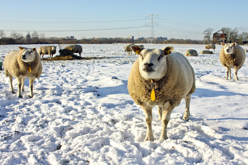 Download Wintertime In The Countryside From Netherlands Stock Photo - Image: 12239528