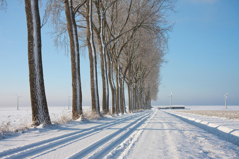 Download Wintertime In The Farmland Of The Netherlands Stock Photo - Image: 12386514