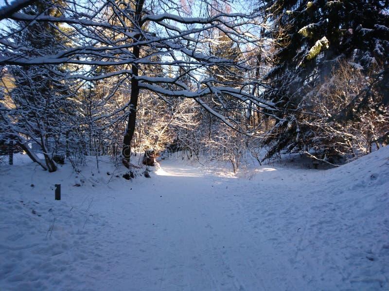 Wintertraum foto de stock